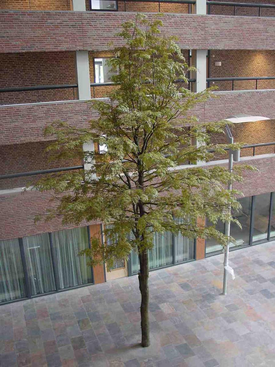 Deze Esdoorn kunstbomen van circa 12 meter hoog geven dit overdekte plein de sfeer alsof je buiten staat.
