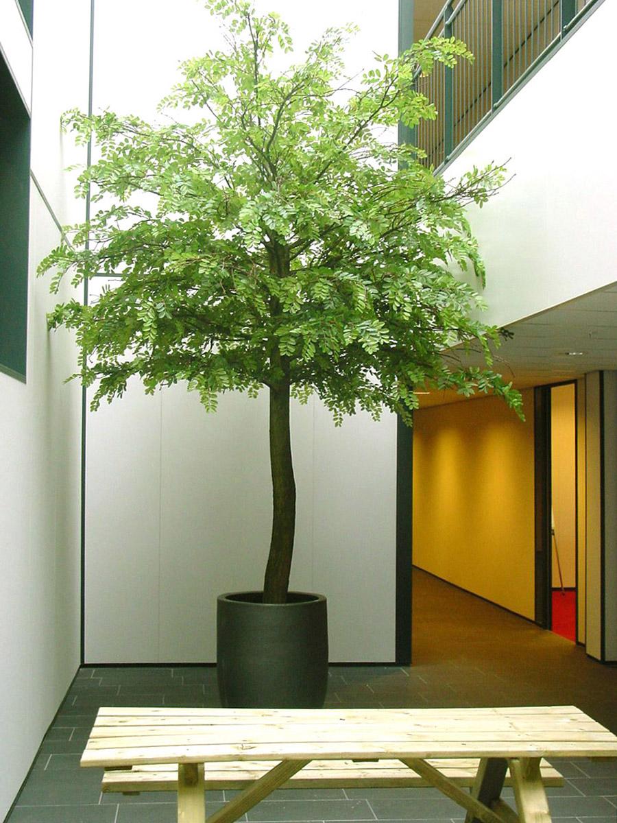 Accacia kunstboom circa 450cm hoog.