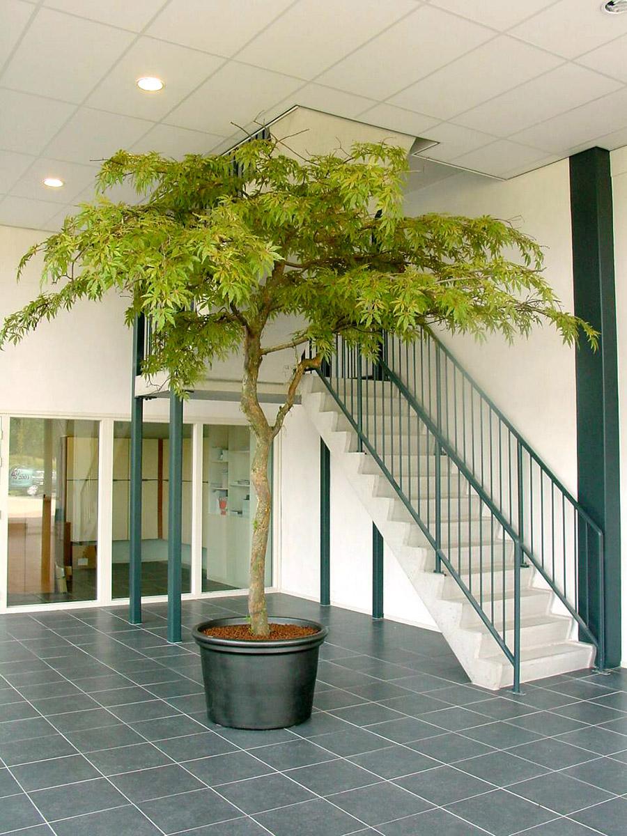 De Esdoorn kunstboom met parasolvormige kruin is een van de meest bestelde kunstbomen bij Kread'or. Geeft veel groene uitstraling maar neemt weinig ruimte in op de vloer.