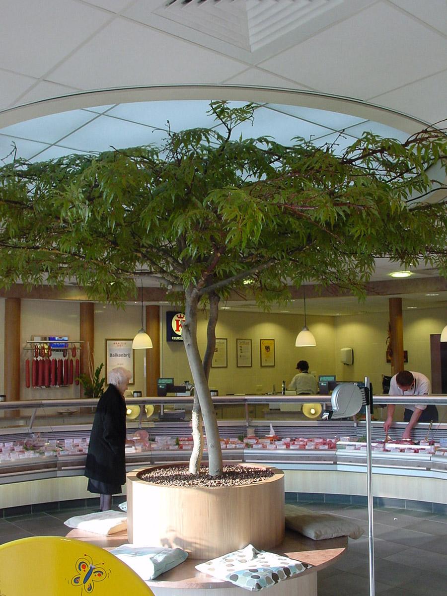 Deze Esdoorn kunstboom met parasolkruin staat bij een slagerij in de winkel. De kunstboom geeft deze winkel veel sfeer en de klanten kunnen tijdens het wachten op de boombank plaatsnemen.