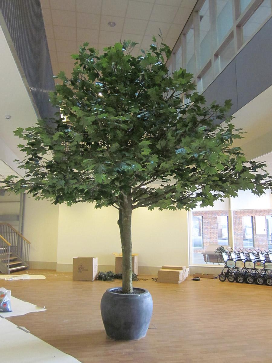 Deze Plataan kunstboom staat in het Bernhoven ziekenhuis in Uden. Met zijn 400cm lengte een prachtige sfeermaker.